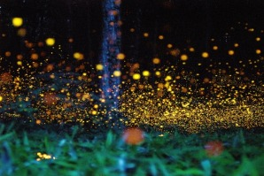 gold-fireflies-2[2]